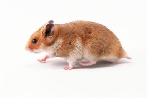 60年属鼠人的灾难年龄