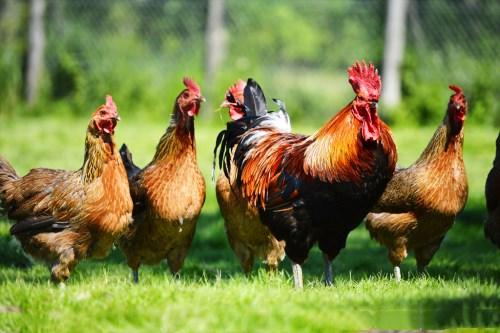 69年属鸡未来十年大运