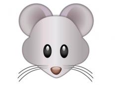 属鼠2019年运势及运程