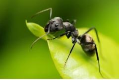 家里有蚂蚁吉利吗,如