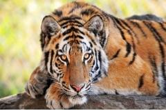 1998年属虎的几月出生