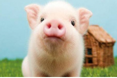 2019年属猪取名宜忌,