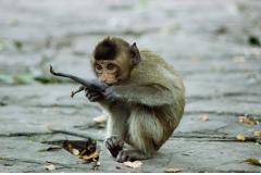 属猴2020年可以生鼠宝
