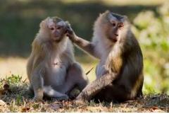 属猴人2019年8月份运势