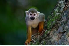 属猴人40岁后的十年大