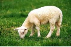 属羊人2019年8月份运势详解,要积极调整好心态
