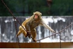 1980属猴的一生财运如