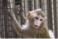属猴80年一生多少子女