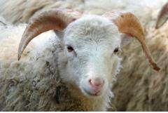 79年属羊人40岁以后的十年运势,40岁以后运势详解