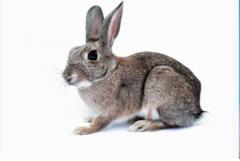 87年属兔人一生三大劫难,需要注意什么