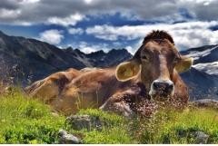 85年属牛2020年财运如何