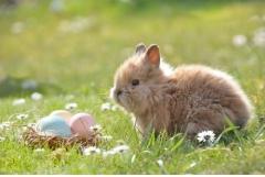 87年属兔人何时行大运,35岁40岁50岁