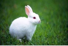 75年属兔男几月出生命最好,六月七月十月