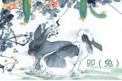 属兔人哪一年犯太岁,