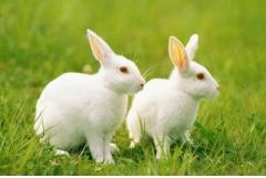 75年属兔女一生婚姻状