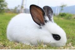 哪年出生的属兔人桃花