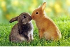 属兔人43岁婚姻劫,怎