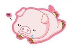 2019猪宝宝几月份出生