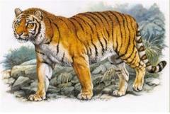秋老虎是什么意思,立