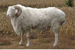 67年属羊人未来十年运势,会迎来好福气