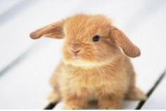 属兔人哪一年最倒霉,