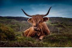 属牛的人最怕什么属相
