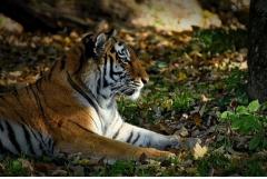 属虎的人最怕什么属相