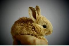 属兔的人最怕什么属相