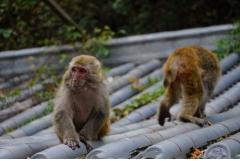 属猴的人最怕什么属相