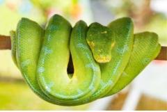 属蛇的人最怕什么属相