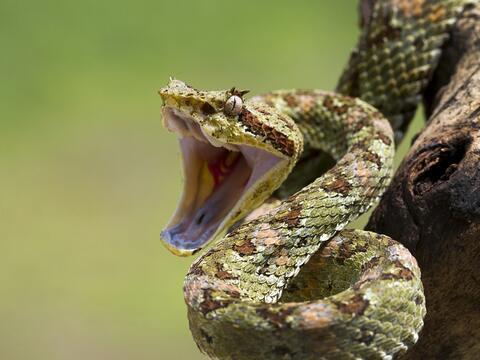 孕妇梦见父亲抓蛇