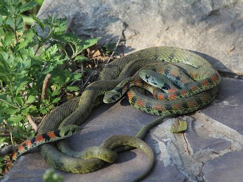 周公解梦梦见三条蛇是什么意思