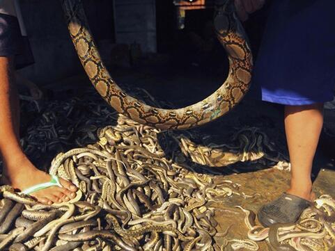 周公解梦梦见很多蛇缠身是什么意思