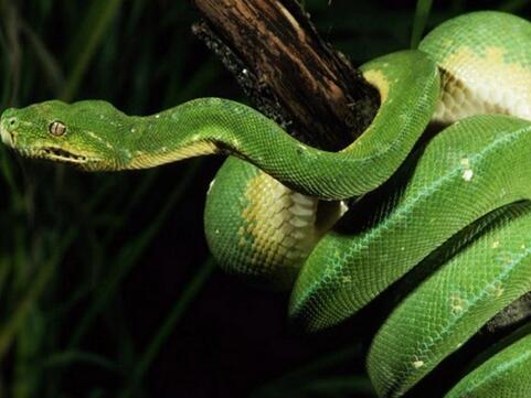 周公解梦梦见别人打蛇是什么意思