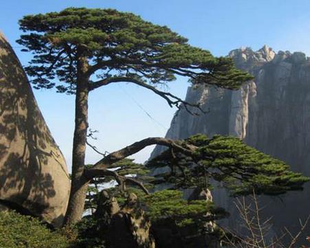描写松树的诗句大全