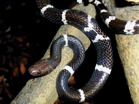 周公解梦女人梦见蛇缠身是什么意思