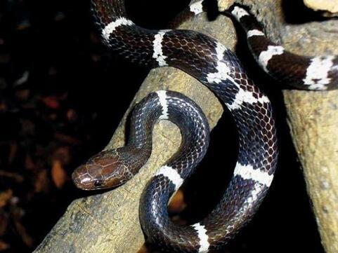 周公解梦孕妇梦见很多蛇是什么意思 孕妇做梦梦到很多