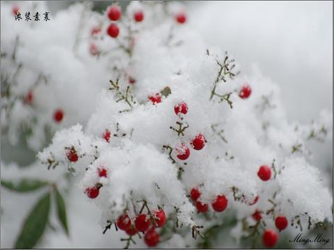 阴历11月17是什么星座_阴历冬月是几月